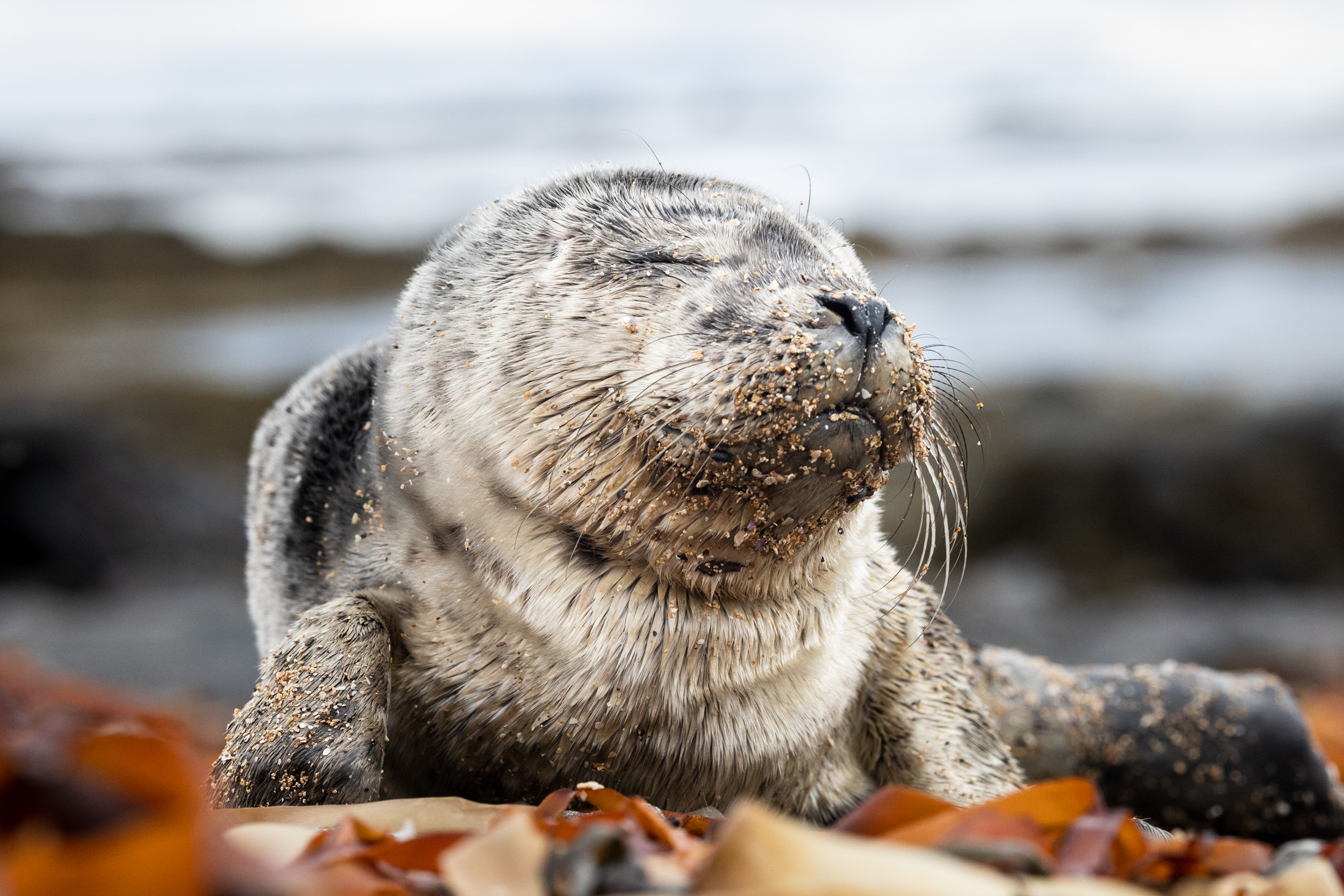 Memorable Encounter With a Seal Pup